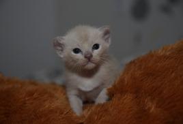 Добавлены фотографии котят