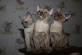 Открыт к резервации лиловый котик :)))
